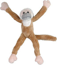 Squirrel-monkey-80218