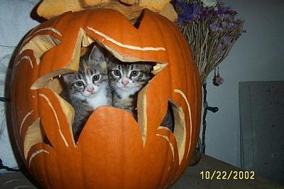 Pumpkincats