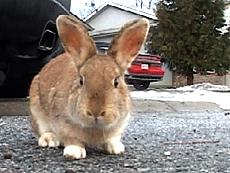 Bc-0711207-bunnies