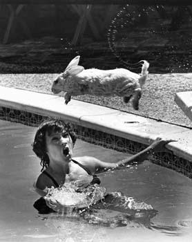 Swimmer rabbit 2