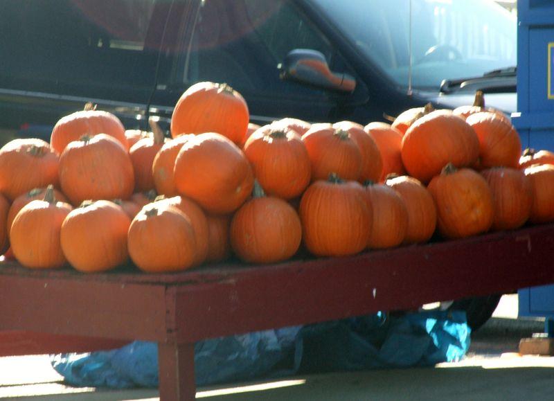Rosie's pumpkins