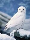 Owls3_2